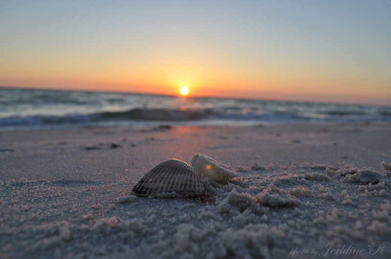 Seashells(Florida West Coast)